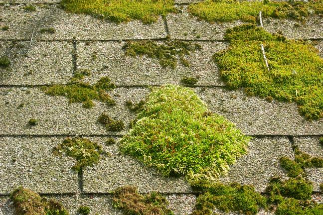 Moss Removal And Treatment John Michael Roofing